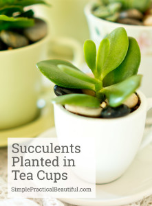 How to plant succulents in tea cups | SimplePracticalBeautiful.com