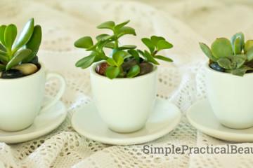 Succulents in tea cup pots | Simple Practical Beautiful.com