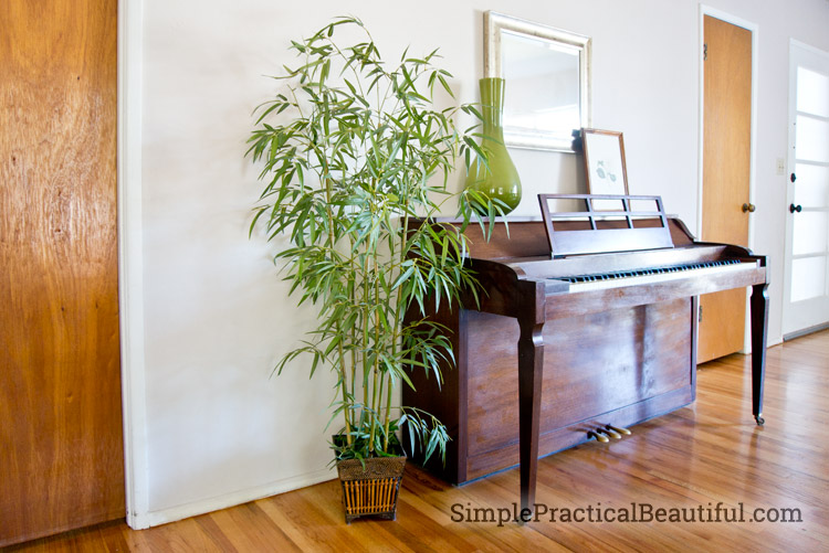 A delicate fake bamboo plant can't take traditional dusting