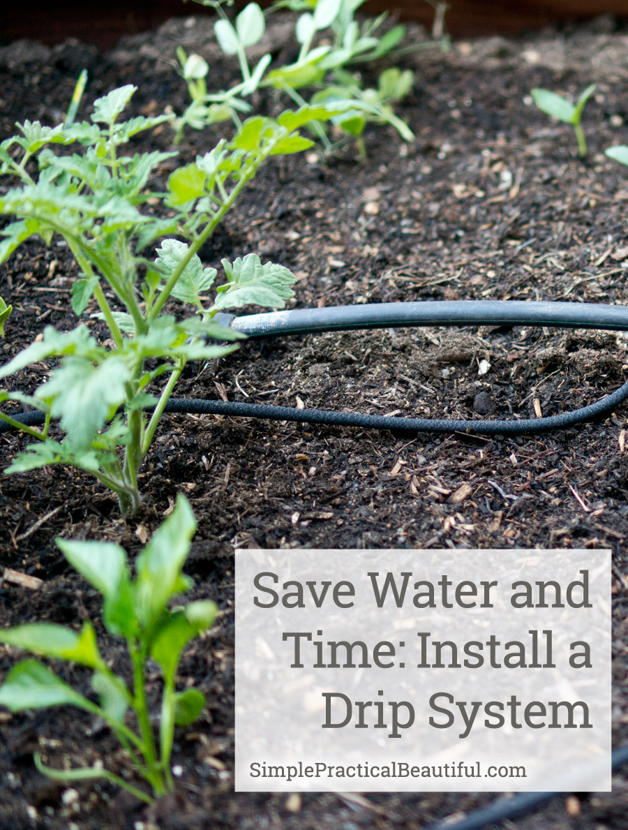 A drip system is an easy way to save time and water for Home garden drip irrigation design