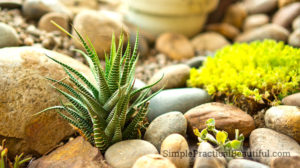 Tips and hints to grow a successful succulent garden in your backyard.