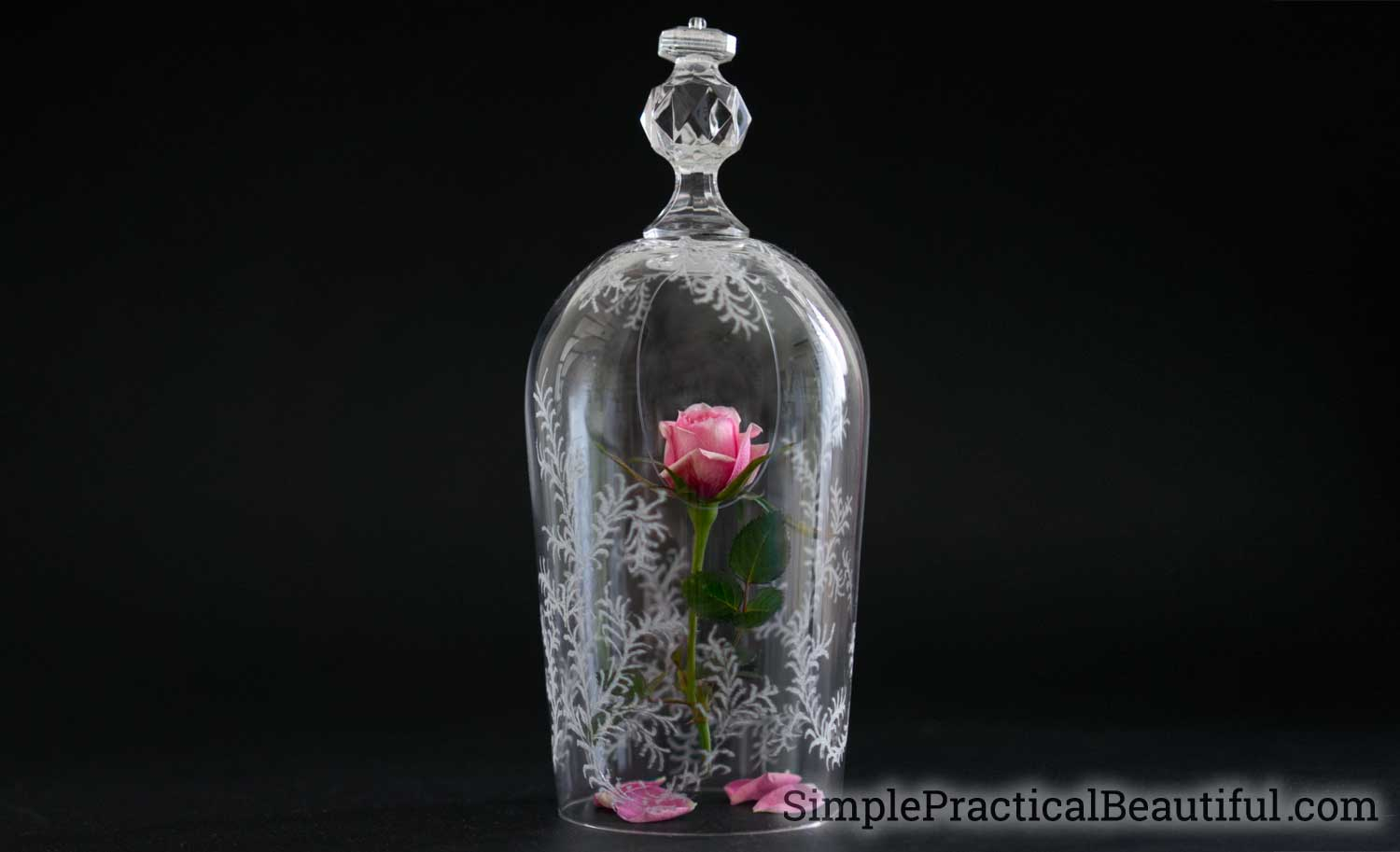 Beauty And The Beast Rose And Glass Cloche Simple Practical Beautiful