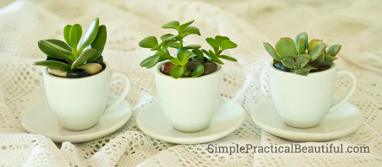 Succulents in tea cup pots | Simple Practical Beautiful.com