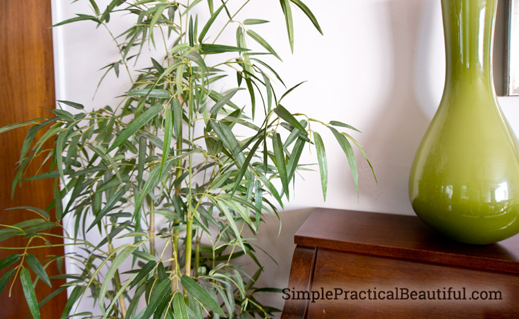 A delicate silk bamboo plant needs to be dusted
