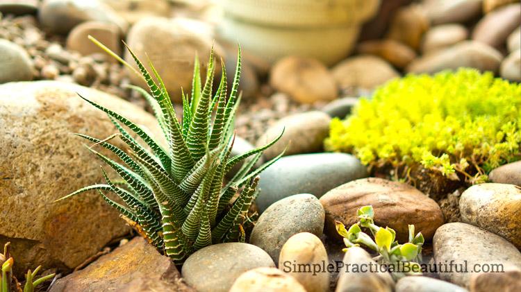 Planting A Succulent Garden Simple Practical Beautiful
