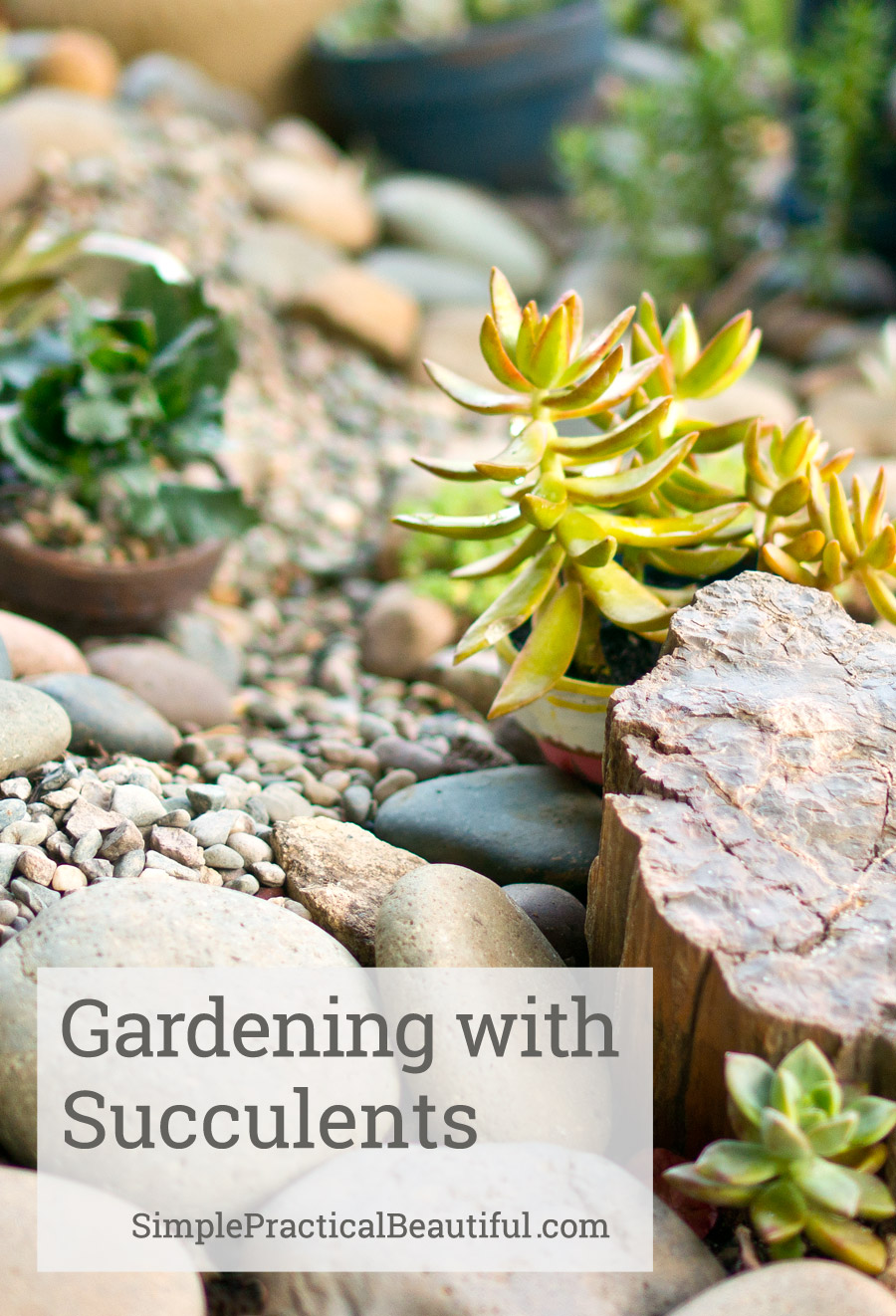Planting A Succulent Garden Simple Practical Beautiful