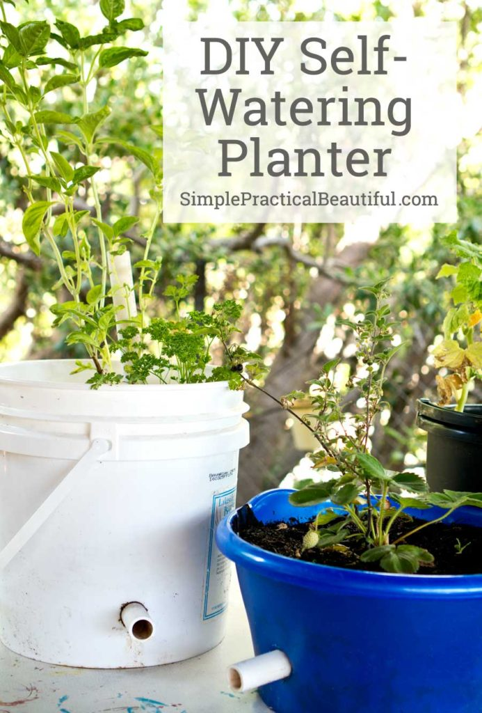 A video tutorial in how to make a self-watering planter or wicking container.