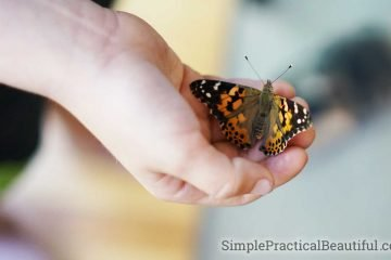 Butterfly life cycle STEM activity